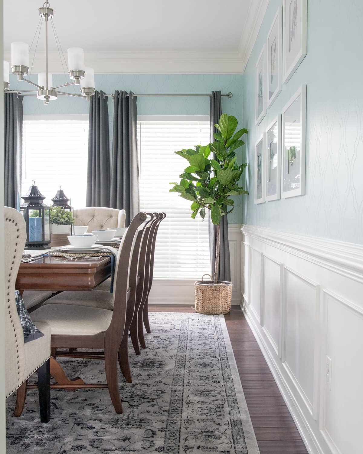 Side view of classic chic dining room. Soft blue walls with white wainscoting, potted plants, neutral rug, and gray curtains.