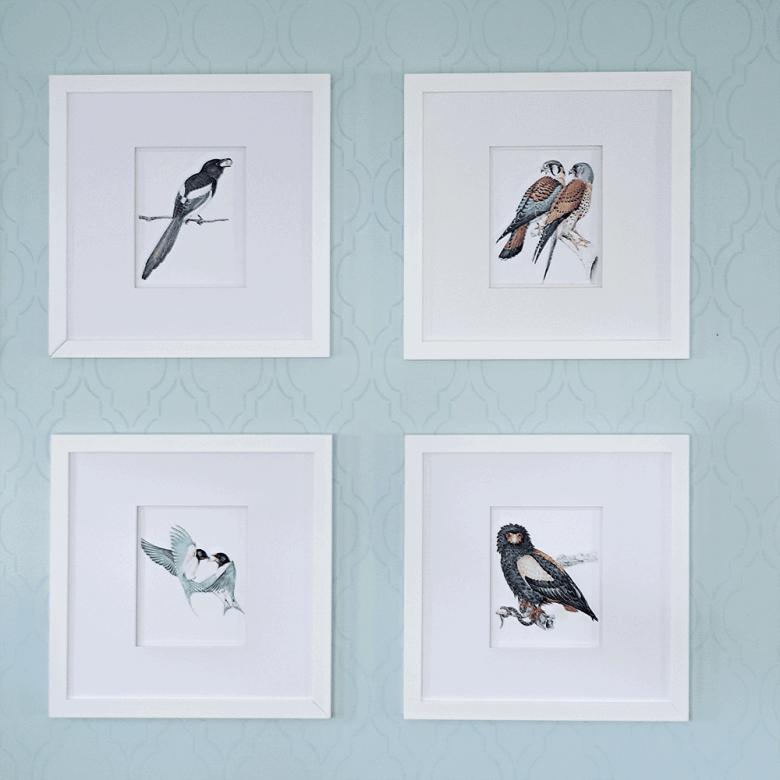 Wildlife-Bird-Gallery-Wall