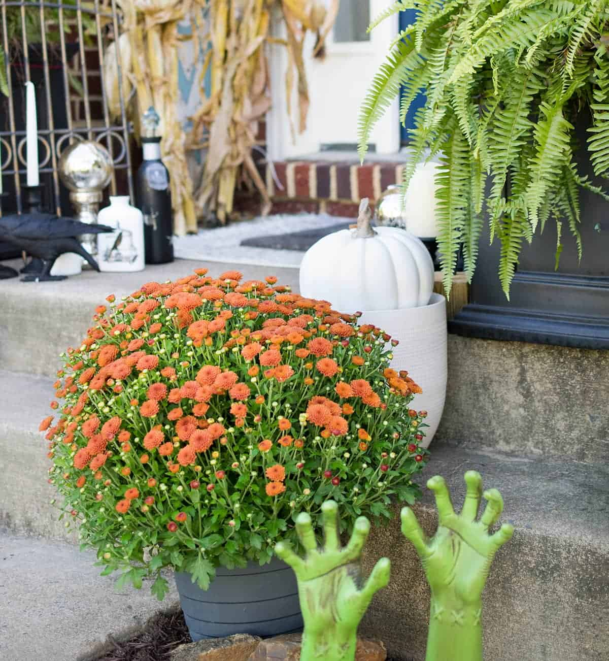 Halloween outdoor decor with white pumpkin, buried hands, ferns and orange mum.